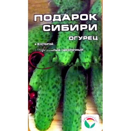 Огурцы подарок сибири отзывы 100